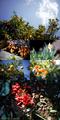 正月の庭風景_190101-03