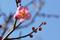 梅の開花_190201