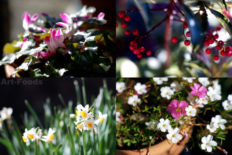 大寒の庭風景_190202
