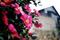 常滑市花の山茶花_181216