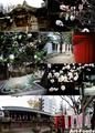 高牟神社境内_190303