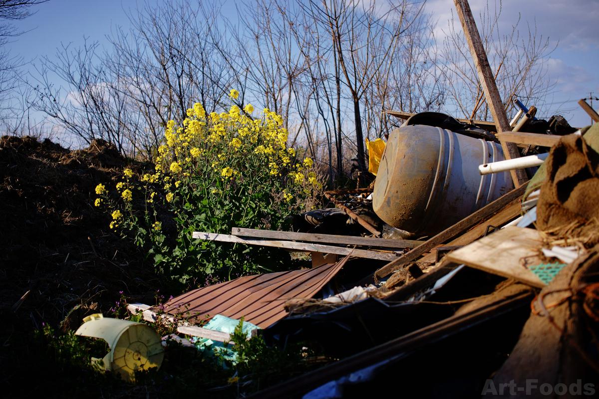 菜の花と廃棄物の山_190403