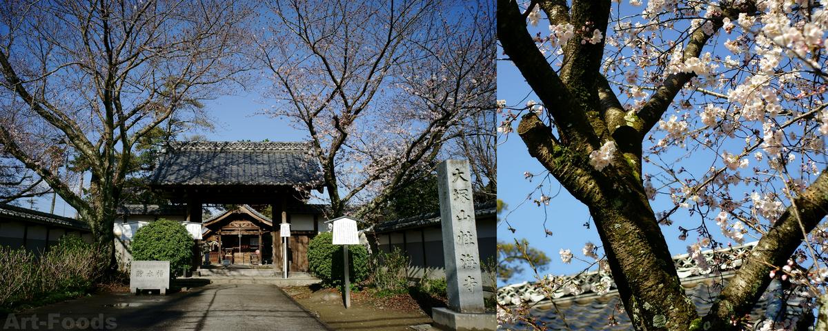 性海寺山門と桜_190331
