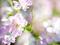 五月の庭風景-ミニバラ_190526