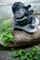龍照院裏庭の獅子瓦_190608