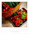 菜園で収穫した万願寺唐辛子とニラ_190806