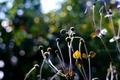初冬の庭風景_191201_アネモネ