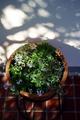 初冬の庭風景_191201_寄せ植えの鉢