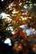 ロモな庭風景-楓の紅葉_191215