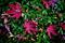 ロモな庭風景-サツキに落ち紅葉_191215