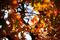 楓の紅葉-1@IDTR-10_191217