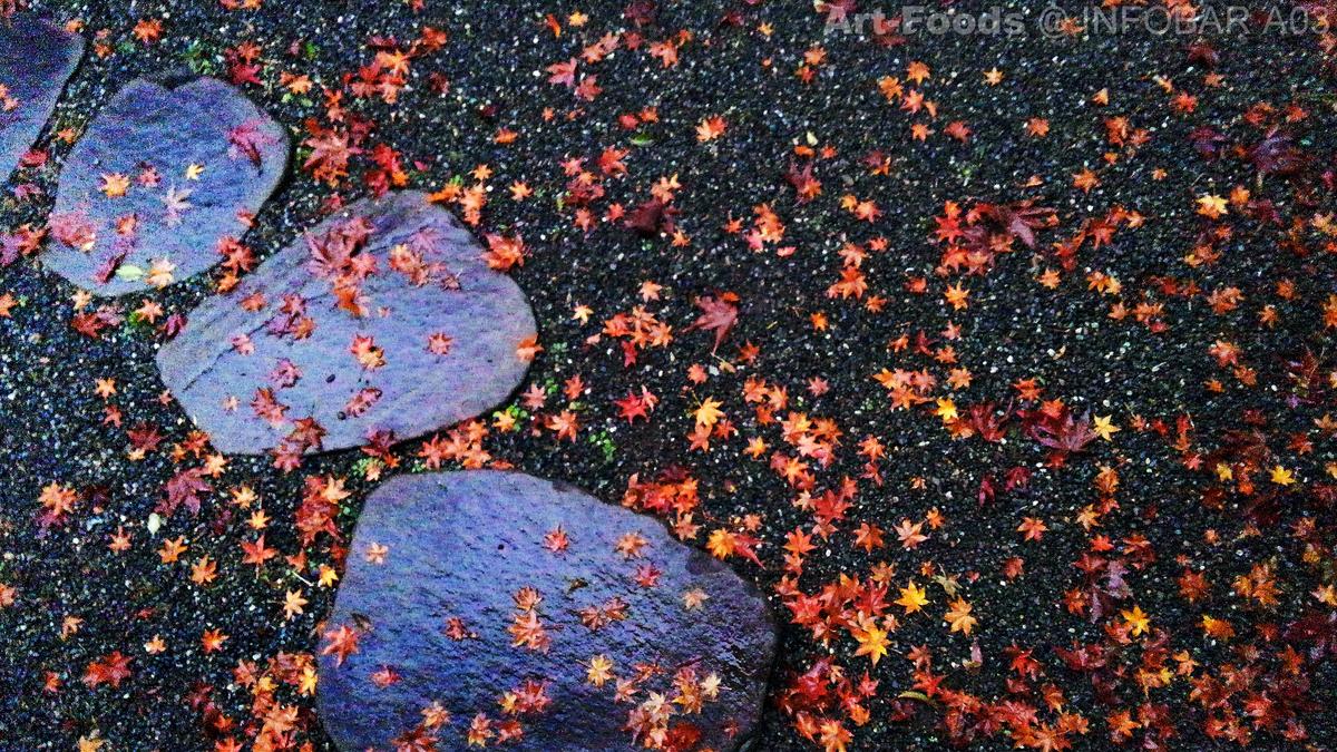 紅葉散る朝の庭_191223
