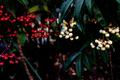 紅白萬両_200102