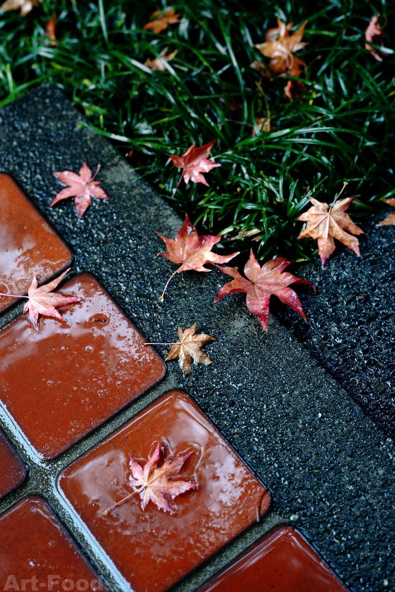 庭風景-雨の朝の濡れ落ち葉_200108