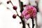 梅の開花_200126