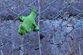 破れ金網に落とし物_200202