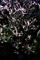 庭乃梅-1_200209