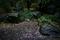 雨の朝~庭に散る梅_200216