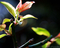庭風景_200322-梅の新芽