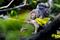 柿の木に野鳩_200410