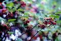 雨の庭風景-ドウダンツツジの開花_200418
