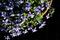 朝の庭風景-鉢植えのヴィオラ_200419