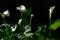 庭風景-カラー_200426