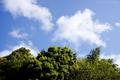 清水区蜂ヶ谷の空と新緑_200424
