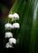 庭風景_200502-スズラン