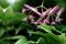 カエデの花と種子_200504