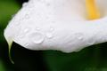 庭風景-カラーに雨滴_200517