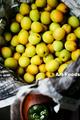 梅の収穫_200614