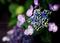 庭風景-紫陽花_200627