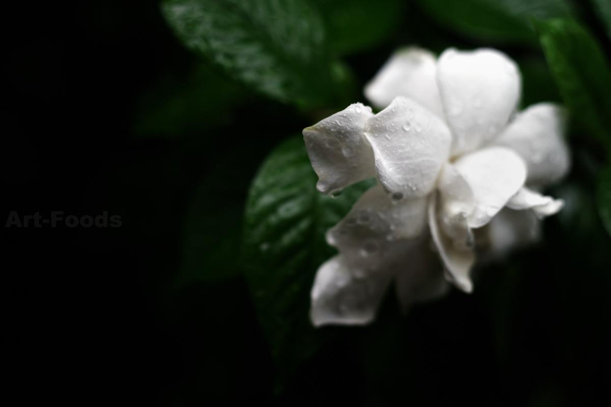雨の庭風景-八重咲梔子_200628