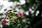 雨の庭風景-サルスベリ_200714