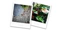 雨の庭風景-セミの穴とキノコ_200715