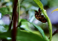 雨の庭風景-セミの抜け殻_200718