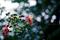 雨の庭風景-サルスベリ_200714  Rainy-Blue