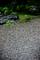 豪雨の庭風景_200726