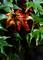 庭風景-楓の部分紅葉_200802