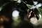 庭風景-セミの抜け殻_200815