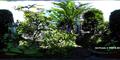 庭風景-セージの花_200816