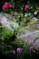 庭風景-三つの花_200913