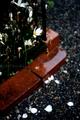 雨の庭風景_ゼフィランサス_201009