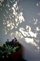 庭風景-鉢植えと木漏れ陽_201113