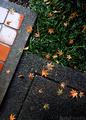 師走の庭風景-雨に散り落ちた楓の紅葉_201230