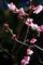 庭風景-梅一分咲き_210207