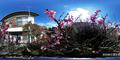 庭風景-梅六分咲き_210214