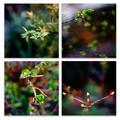 雨の庭風景_210313-芽吹き