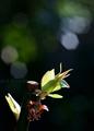 庭風景_梅の新芽_210314